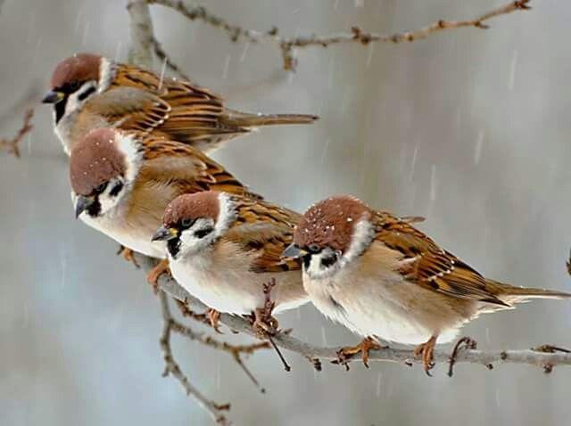 b01258206874aeb690c45af558464abb--science-nature-little-birds
