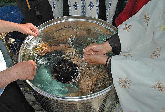 botez-IN1