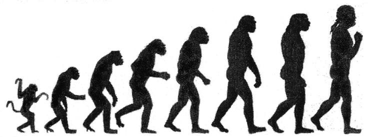 Darwin-chart