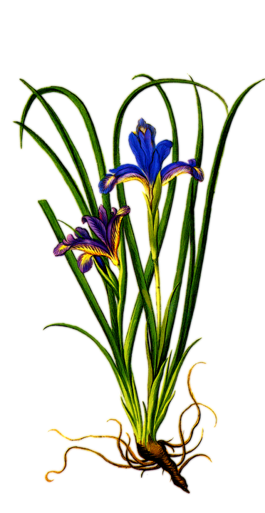 plant-1241708_960_720
