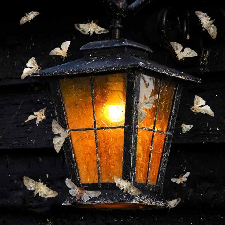 Nachtfalter-Lichtverschmutzung-Licht-Fotolia_82295393_Alexey_Protasov.jpg.3069377