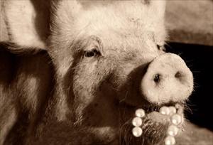perle-ai-porci-margaritas-ante-porcos